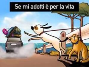 Cani_adottat